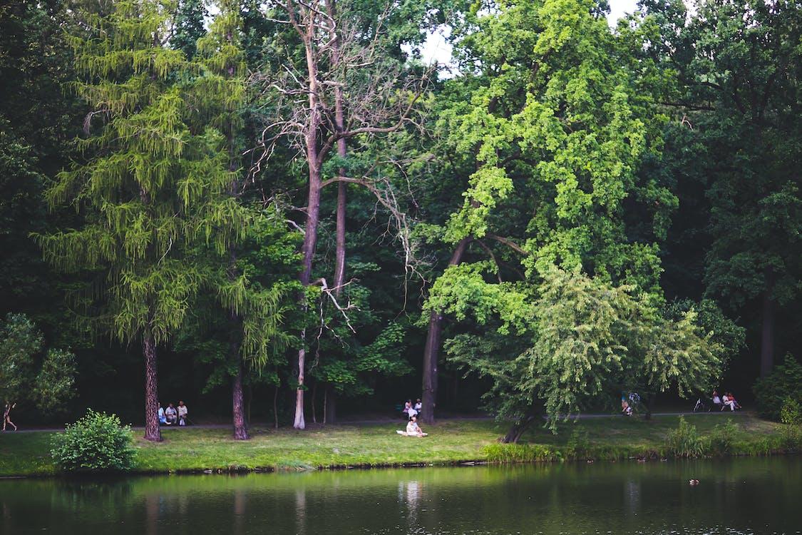 emberek, erdő, fák