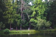 nature, people, forest