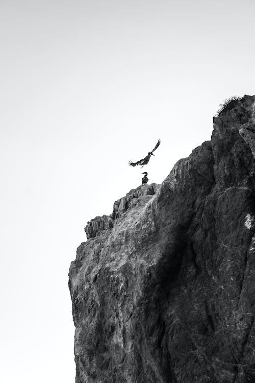 Foto profissional grátis de ação, alpinista, alto