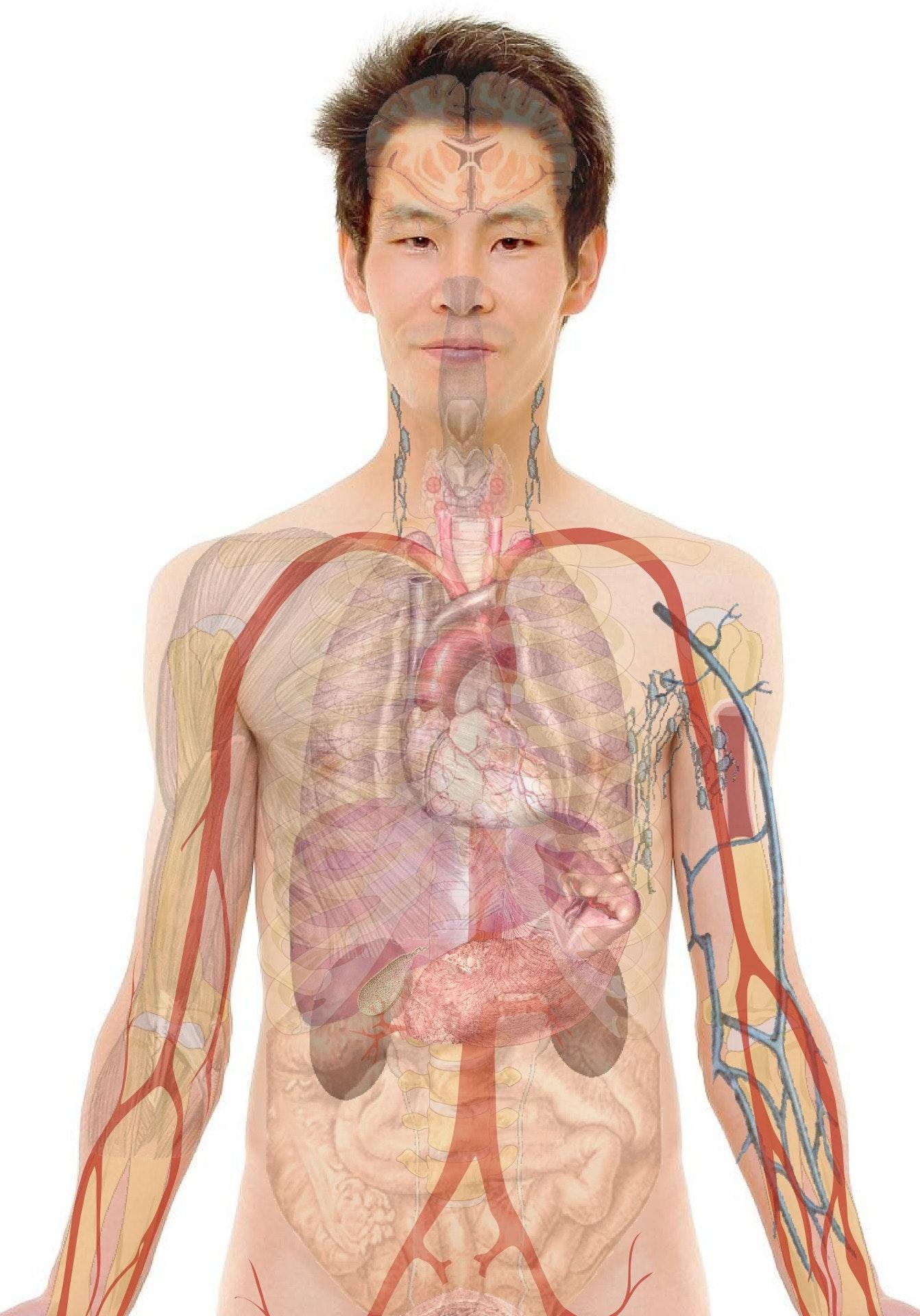 Kostenloses Foto zum Thema: anatomie, augen, bauch