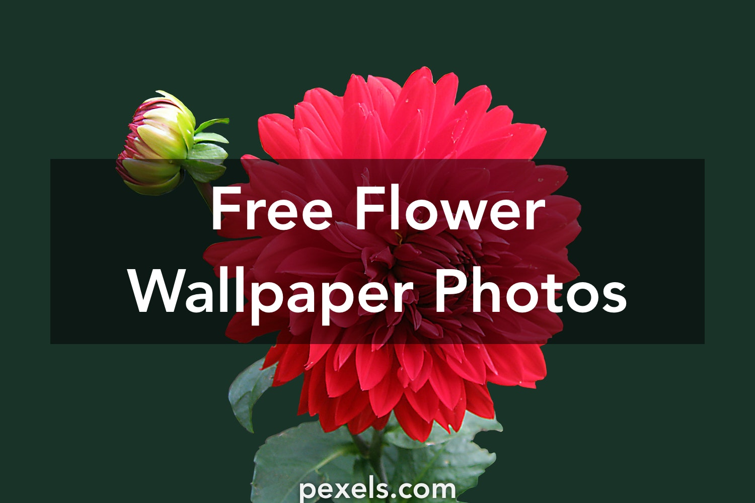 Flower Wallpaper Pexels Free Stock Photos