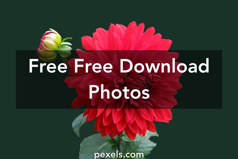 250+ Interesting Free Download Photos · Pexels · Free Stock Photos