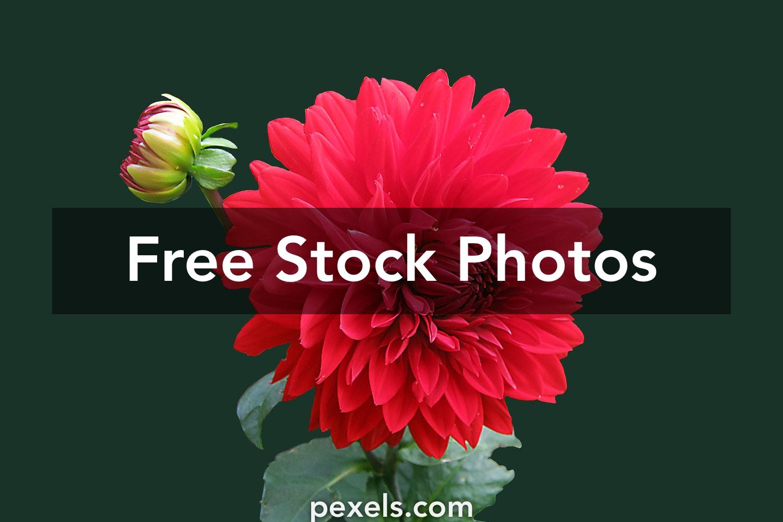 Flower Wallpaper Pexels Free Stock Photos