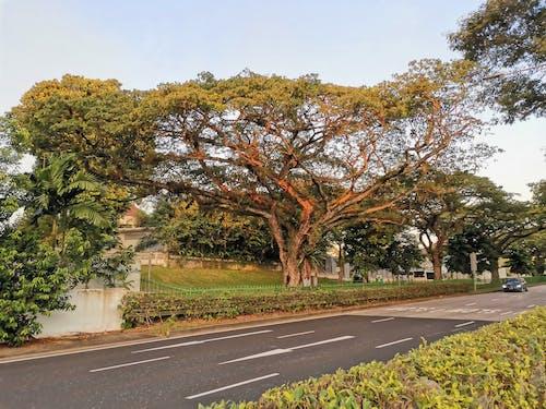 Free stock photo of a tree