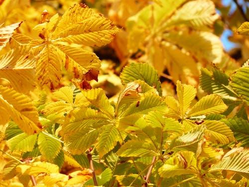 Imagine de stoc gratuită din arbore, copac, galben, galbenă