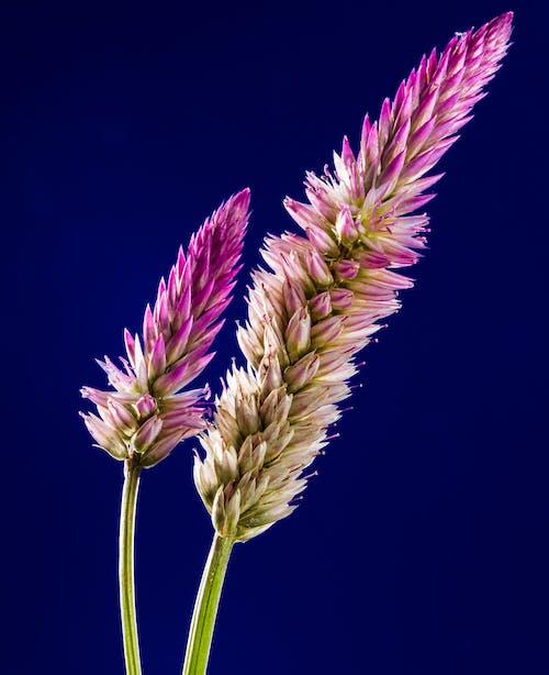 Darmowe zdjęcie z galerii z dzikie kwiaty, flora, kwiaty, kwitnąć
