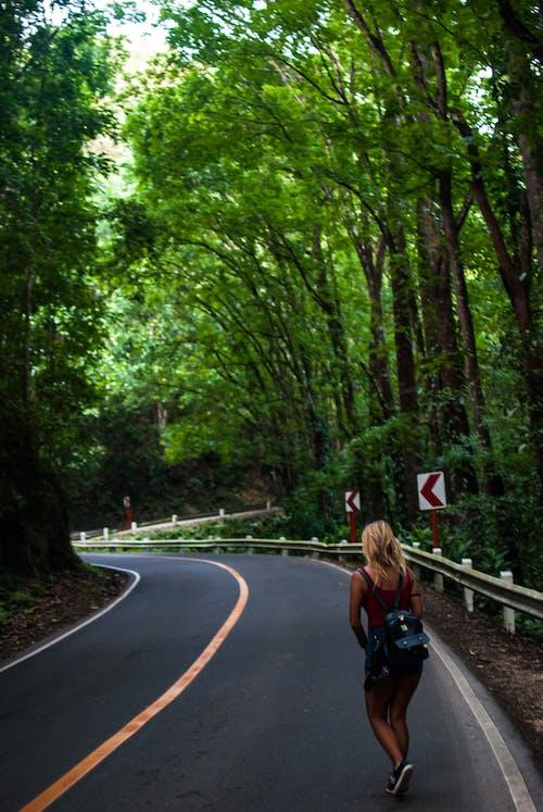 Kostenloses Stock Foto zu bäume, forststraße, gehen