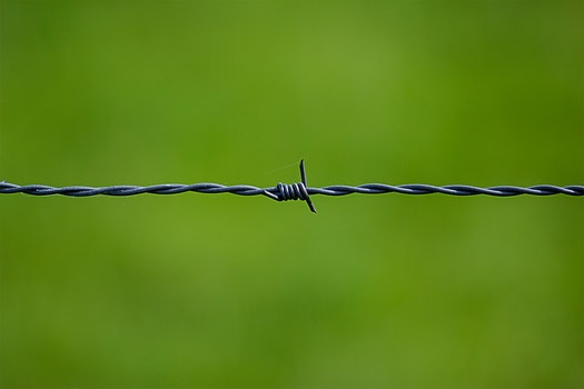 Barbed Wire Near on Green Surface
