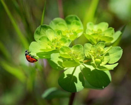 Red and Black Bug on Green Leaved Plant