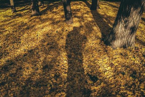 Ingyenes stockfotó aranysárga, árnyék, áttűnés témában
