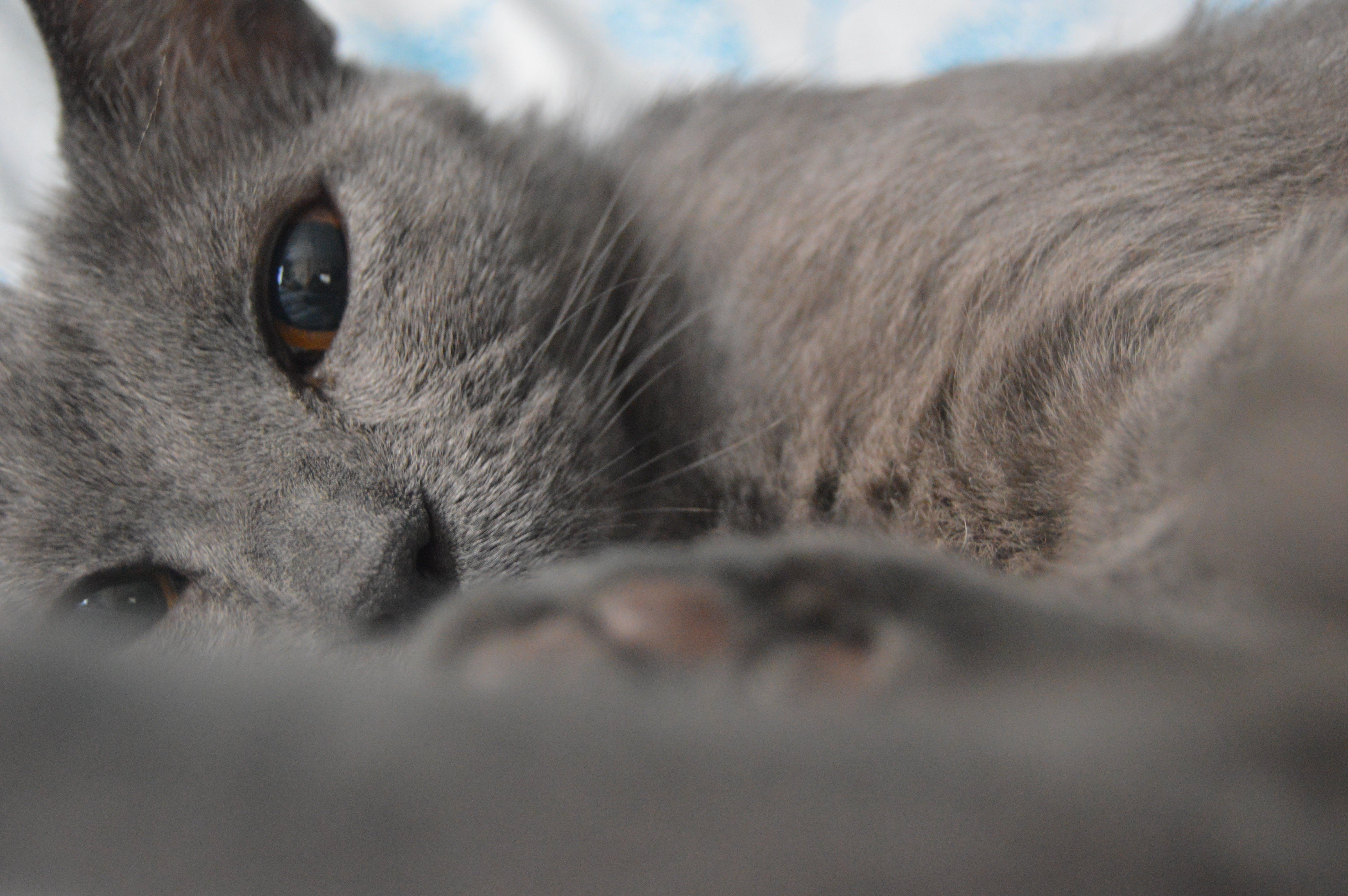 Kostenloses Stock Foto zu augen, haustier, katze, schlafen