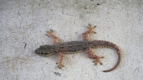 Free stock photo of lizard