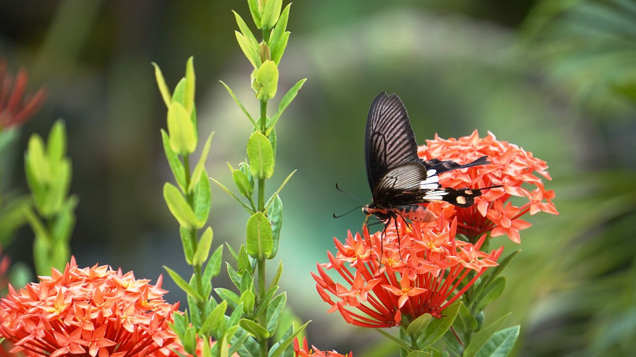 Free stock photo of butterfly with flowers