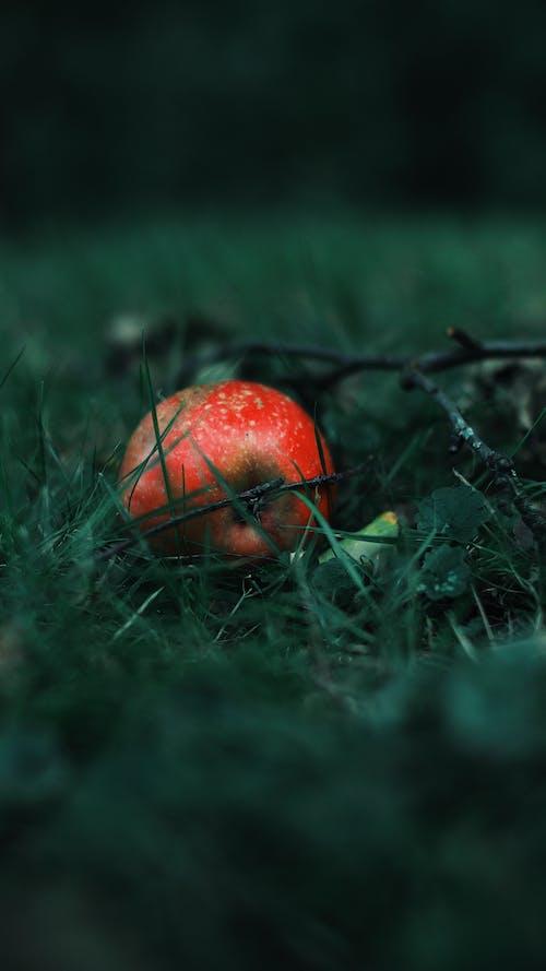 Free stock photo of apple