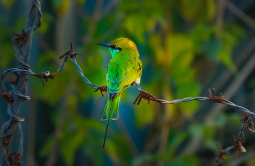 Small green bee eater on metal enclosure