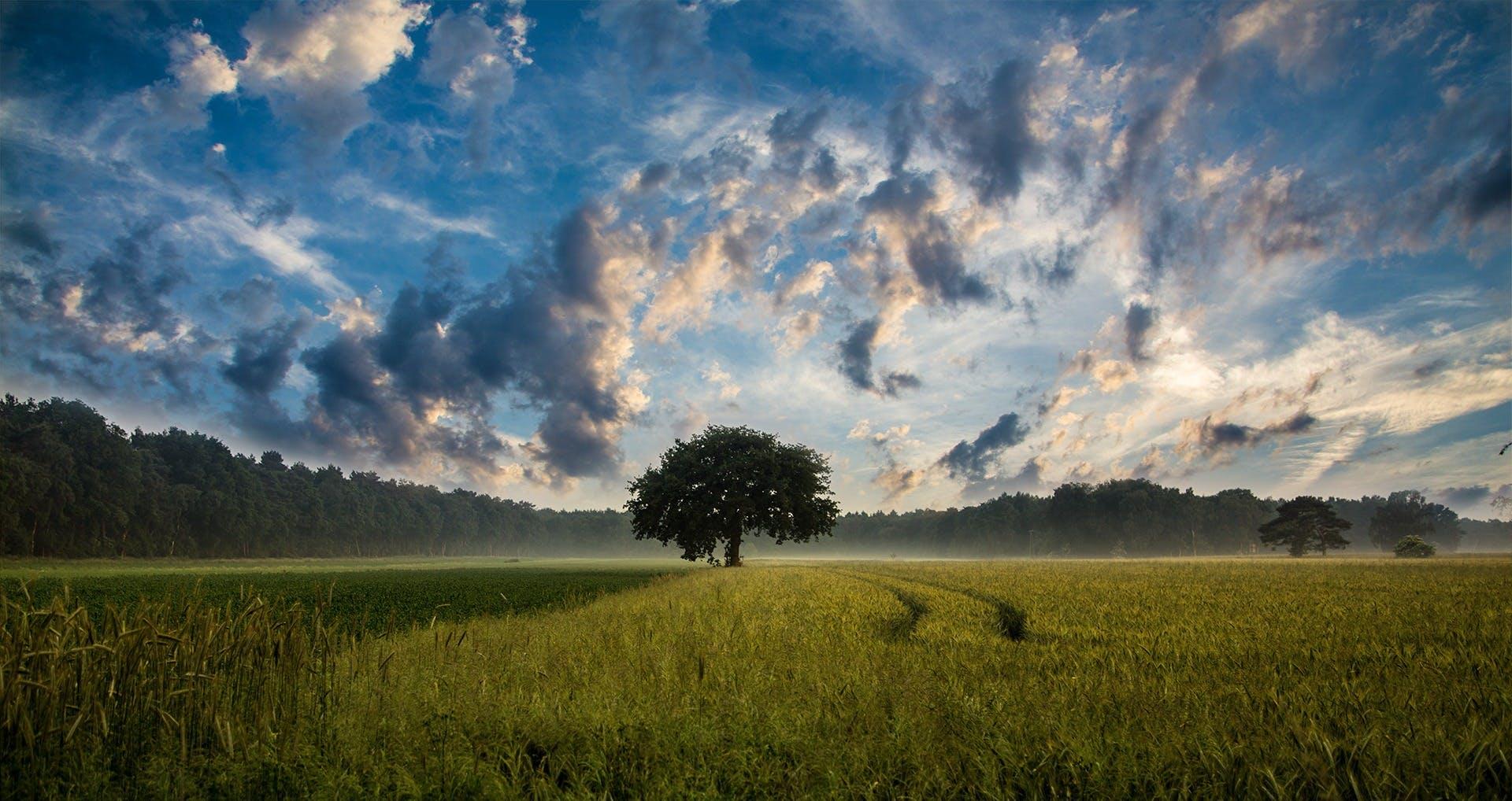 clouds, cornfield, field