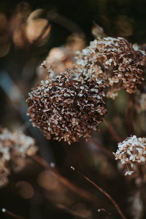 Dry inflorescences in gloomy nature