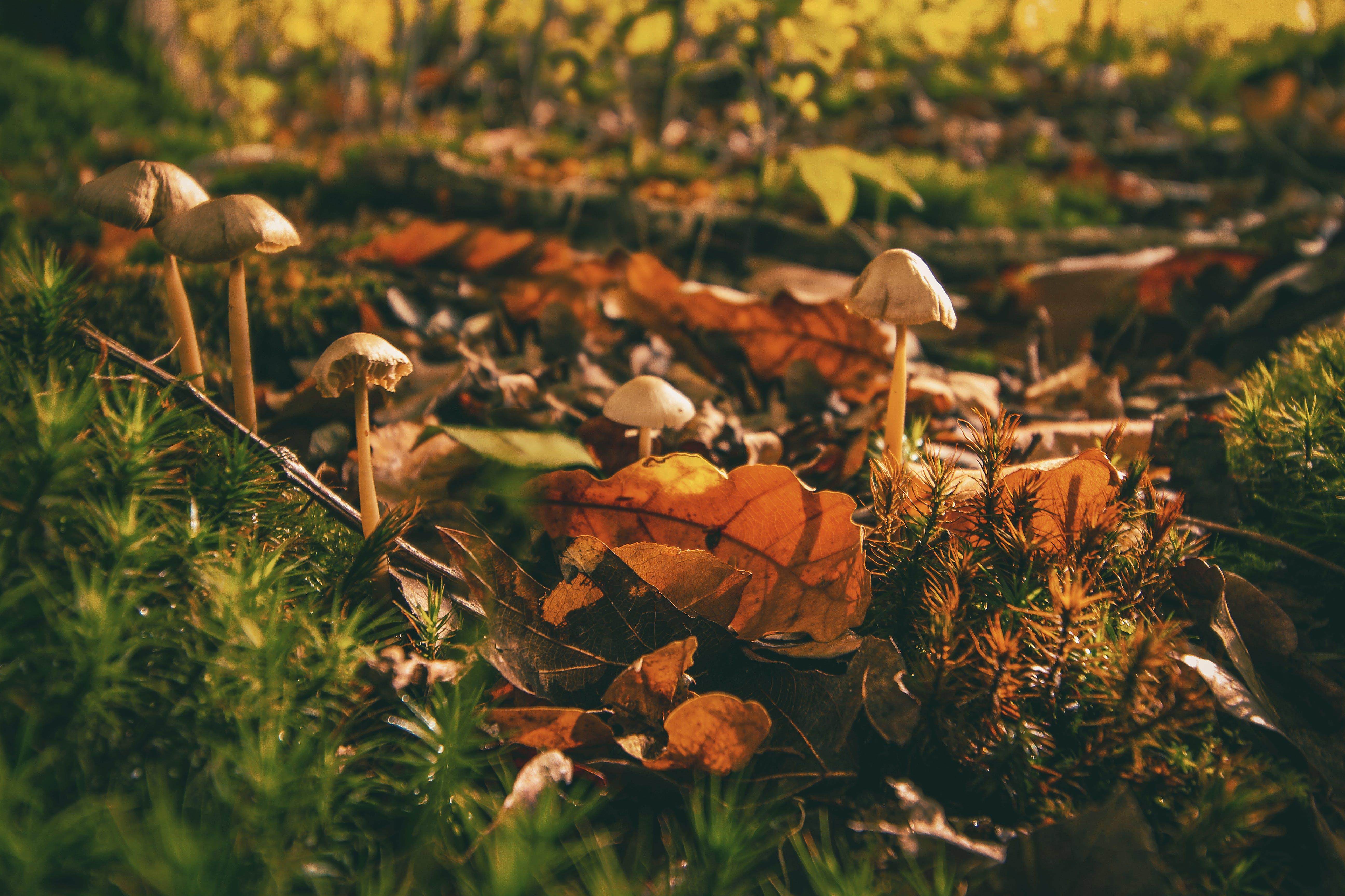 Mushrooms on Pile of Dried Leaves