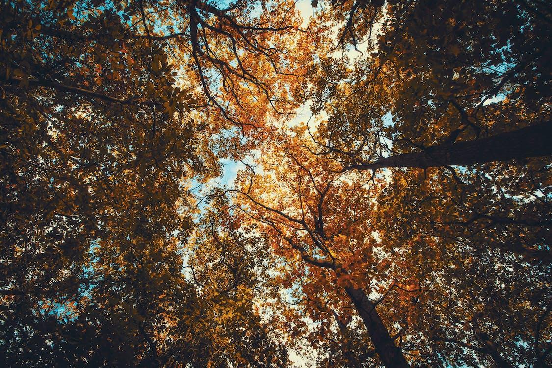 drzewa, natura, perspektywa