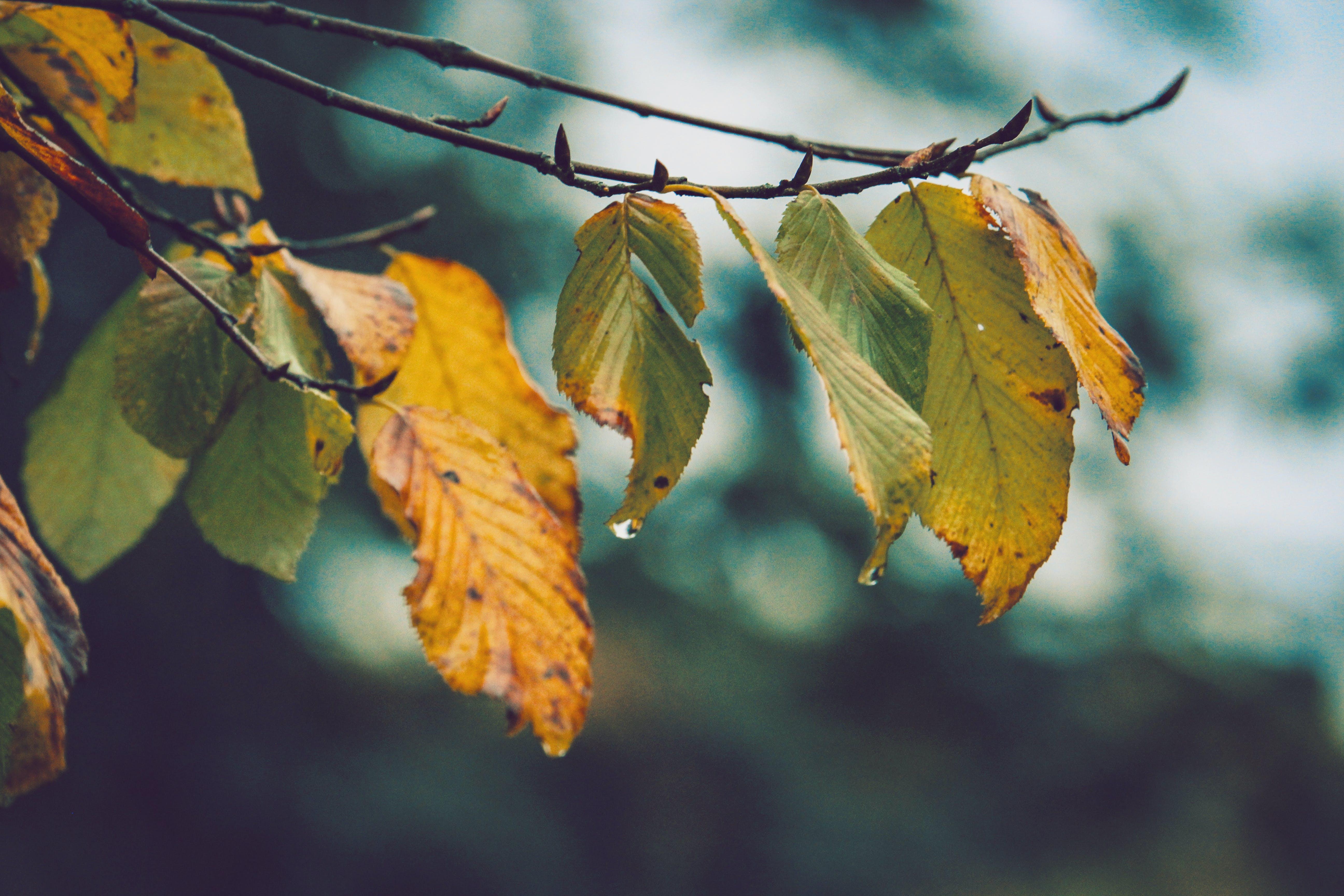 after the rain, autumn, autumn leaves