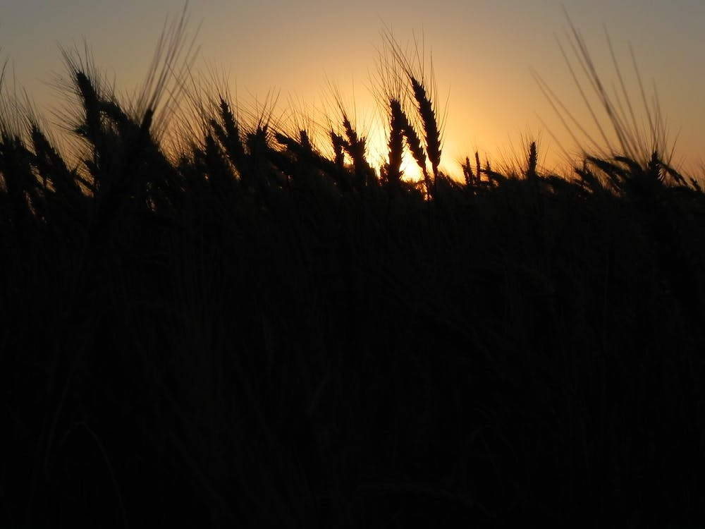 Free stock photo of colheita, farm, fazenda