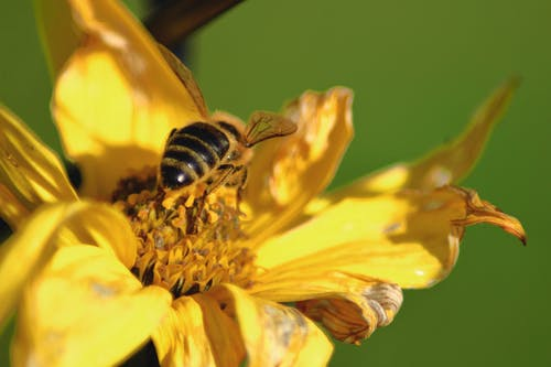 Foto stok gratis alam, bunga, kuning