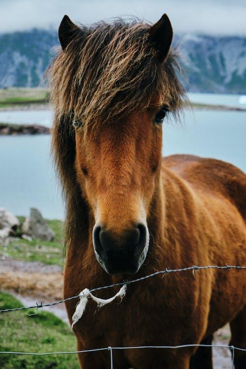 Horse on Green Grass Near the Lake
