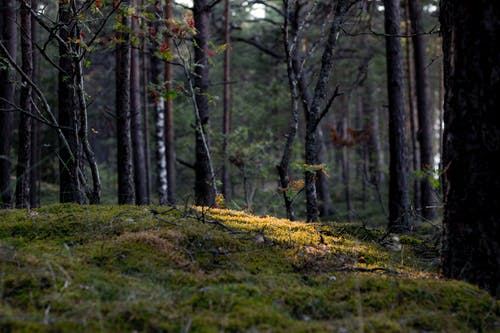 Free stock photo of forest