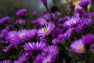 field, flowers, summer