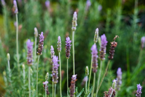 Fotos de stock gratuitas de abundancia, arbusto, aroma
