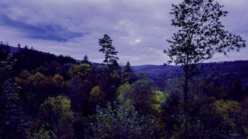 Foto d'estoc gratuïta de bosc, ennuvolat, filtre, groc