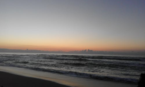 Free stock photo of life, nature, ocean