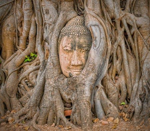 Immagine gratuita di albero di banyan, attrazione turistica, ayutthaya