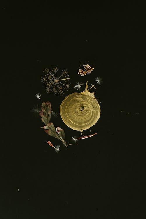 Ingyenes stockfotó absztrakt, Arany, borús, botanikus témában