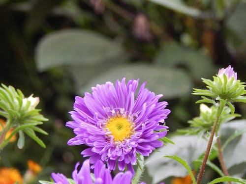 Kostenloses Stock Foto zu # flowerphotography # nikon # d750 # kolkata
