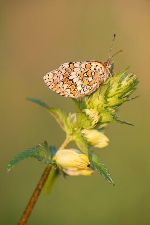 hyönteinen, kasvi, kesä