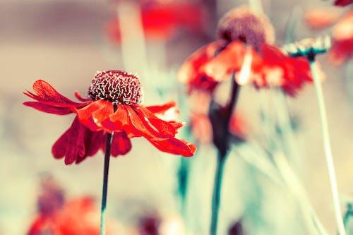 Free stock photo of blur, detail, flora