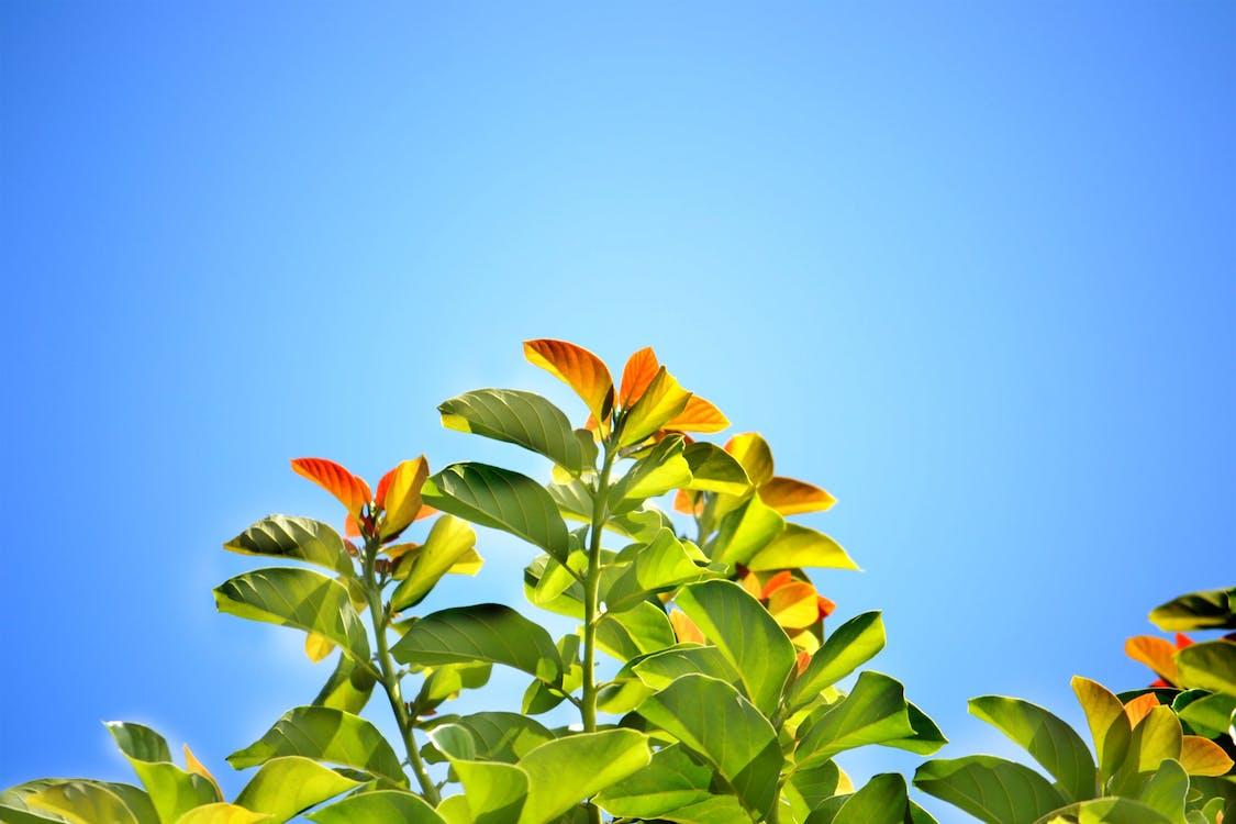 arka ışık, Aydınlık gün, bitki örtüsü