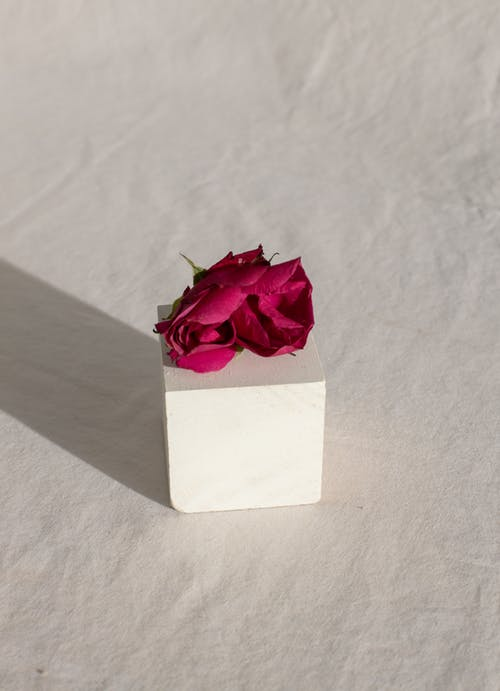 คลังภาพถ่ายฟรี ของ กลีบดอกไม้, การประสาน, ของขวัญ