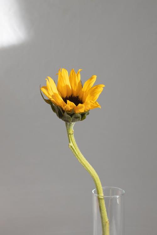 ガラスの花瓶の明るい黄色の花