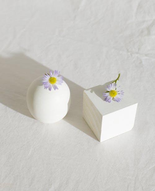 Delicadas Flores De Camomila Colocadas Em Esferas E Cubos