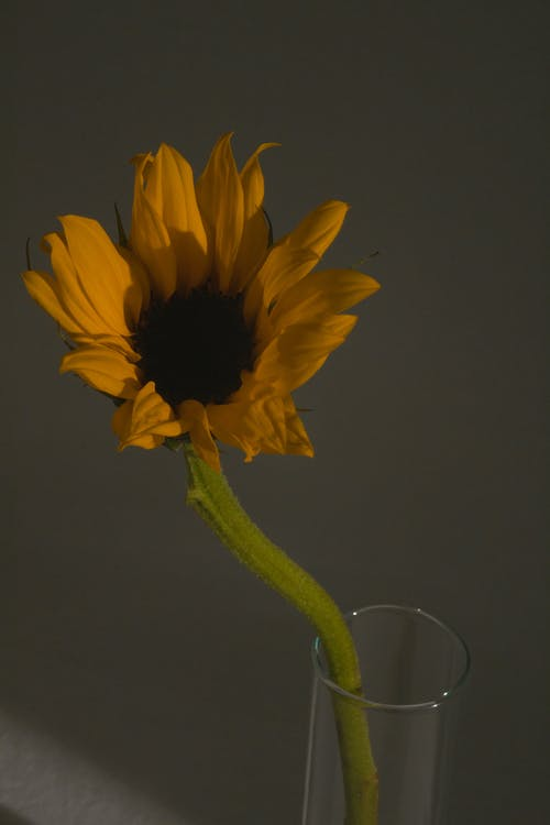 Bright yellow flower in glass in dark room