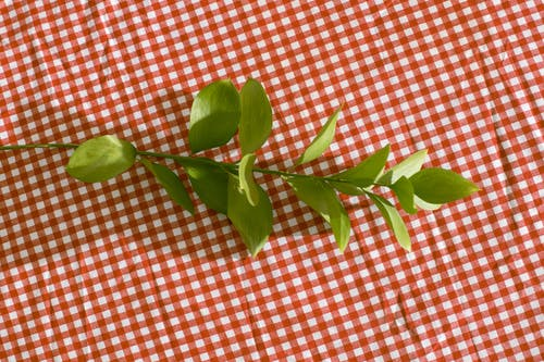 Branch with bright green leaves placed on checkered tablecloth