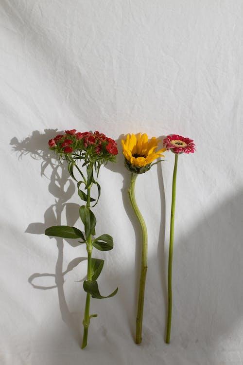 新鮮なさまざまな優しい花が並んでいます