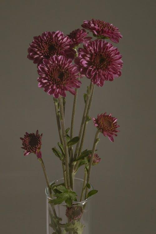 紫色精美的花朵放在玻璃花瓶中
