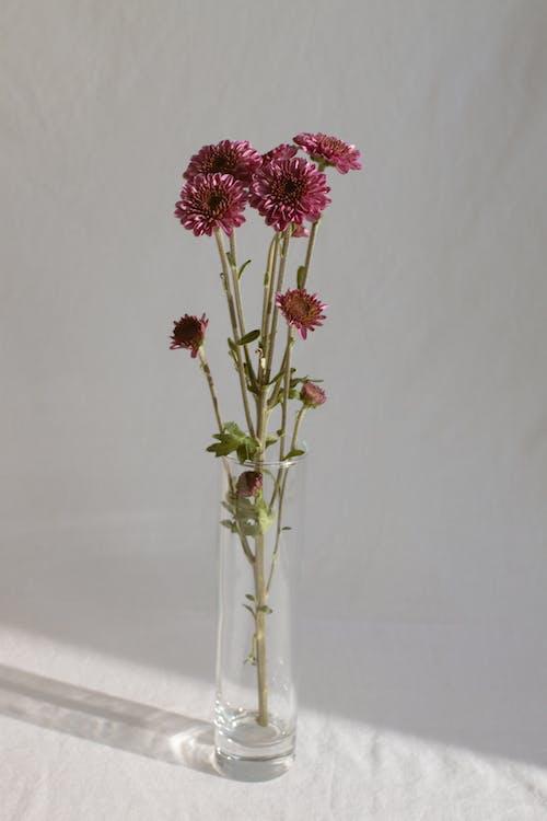 Gentle fresh flowers in glass vase in daylight