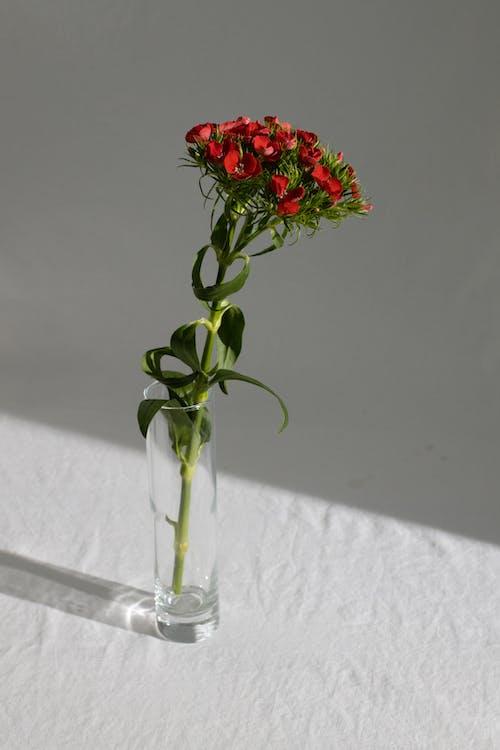 Fleur En Fleurs Dans Un Vase Sur La Table