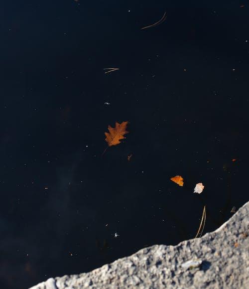 Dark water with autumn leaf