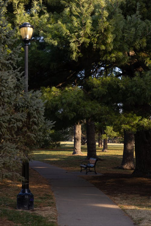Pathway with lantern and bench surrounded with lush pine trees in sunny city park
