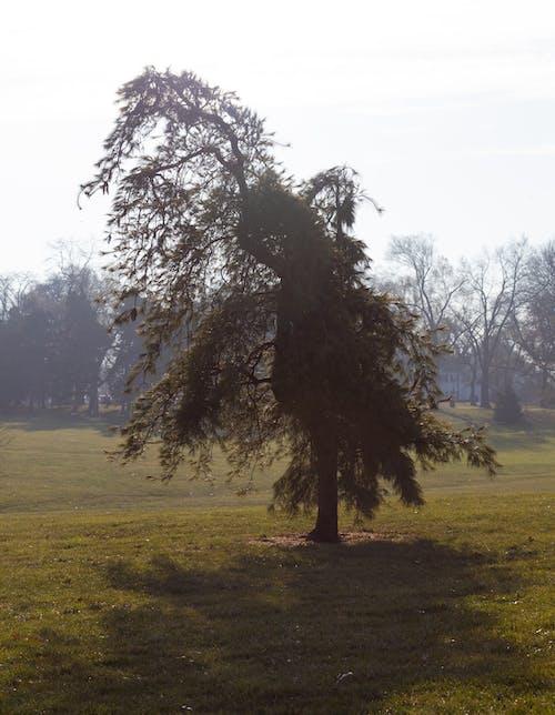 Unusual tree on green meadow